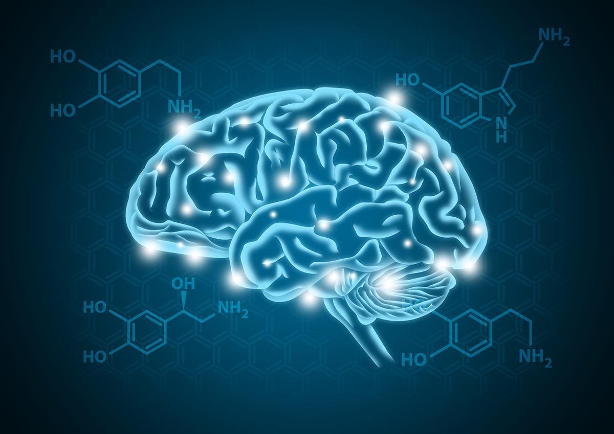 (RU) Как серотонин влияет на пищевое поведение?